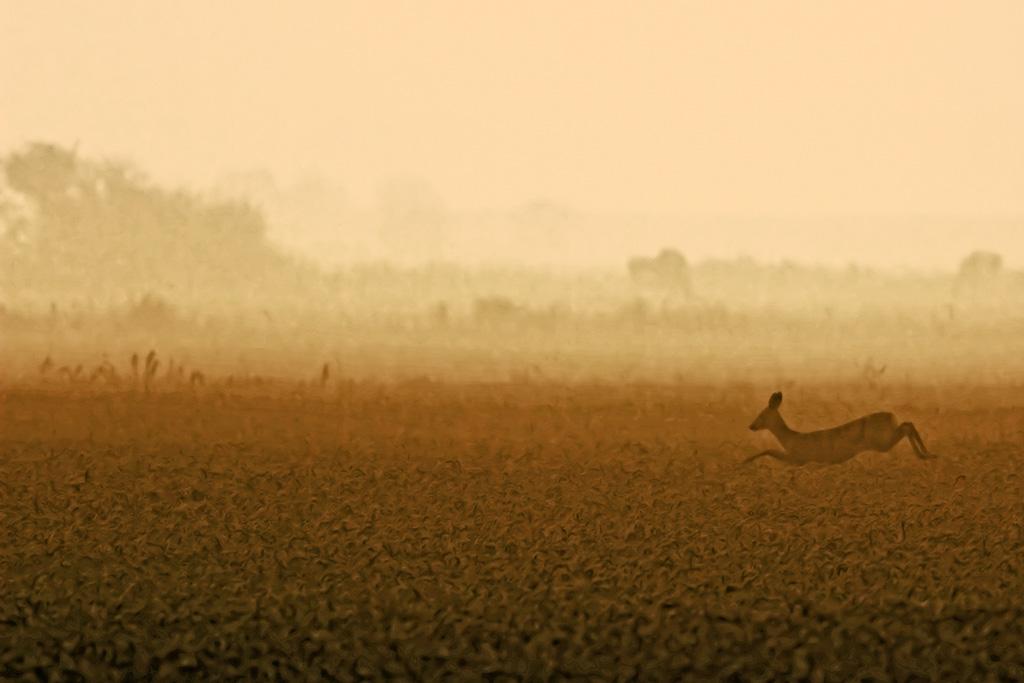 IMAGE: http://rbeene.com/Deer-202.jpg